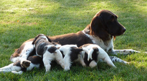 Beans_and_pups